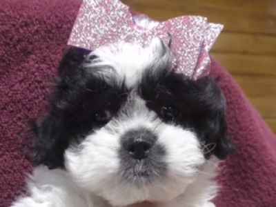 Shichon female 1546